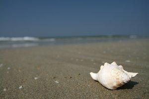 white seashell lying