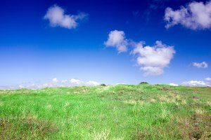 A hill of green grass