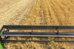 Colorado Wheat Harvest