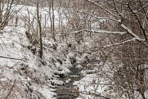 Stream winter