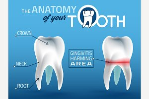 Tooth Anatomy