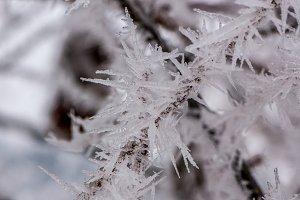 Frozen crystals
