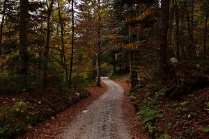 Down the Autumn Road in Forest