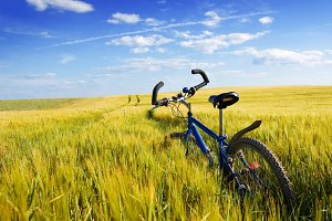 Bike on the green field.