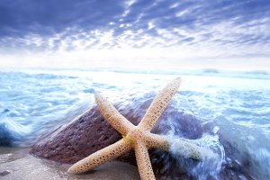 Starfish in on the beach.