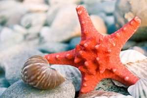 Starfish and shells.