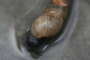Snail macro 2