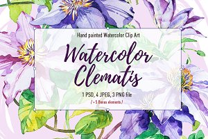 Clematis watercolor clipart