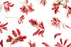 Red leaves pattern
