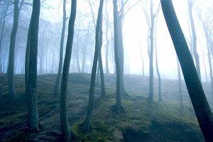 Fog in dark forest.