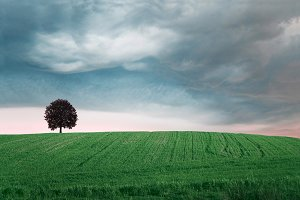Storm over green field with tree.