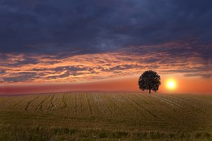 Sunset over field with tree.