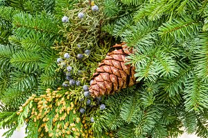 Evergreen arrangement with cone