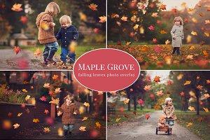 Maple Grove - falling leaves overlay