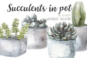 4 watercolor succulents set