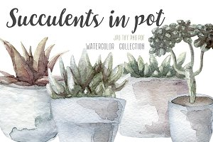 4 succulents in pot watercolor set