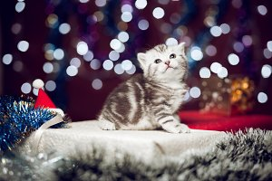 Curious kitten sitting on Christmas gift