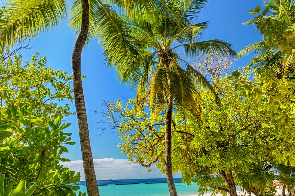 Tropical island with coconut palm t…