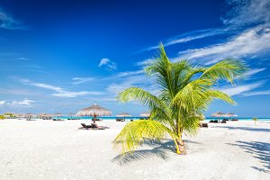 Beach with coconut palms and deckchairs on a small island resort in Maldives