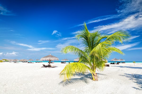 Beach with coconut palms and deckch…