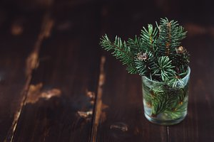 Branch of fir-tree in a water glass