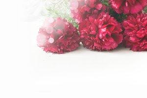 Stunning red peonies