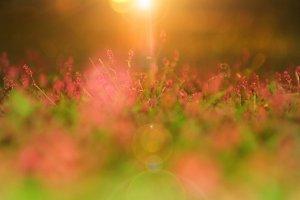 Wild Flower Garden - Imagination