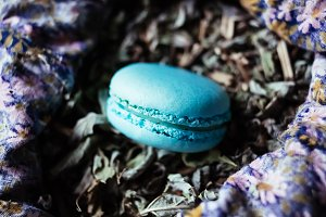 French sweet delicacy mint macaroon