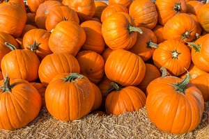 Pumpkins in a large display