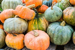 Winter squash at the market