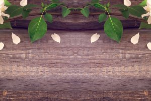 Rustic spring boards background