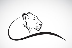 Vector of a lion female design.