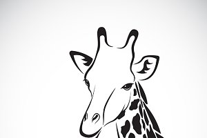 Vector of a giraffe head.