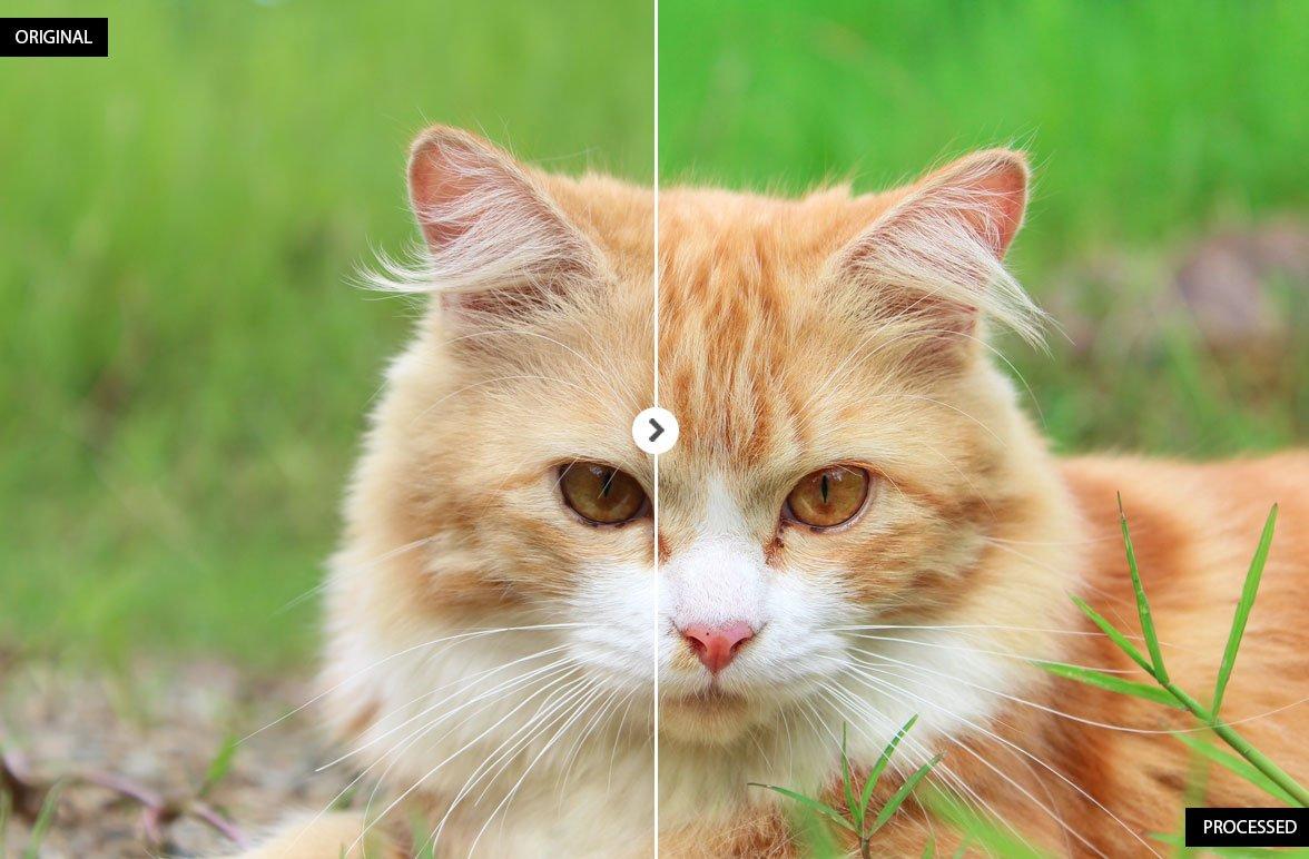 17 Animal Lightroom Presets - Add-Ons - 3