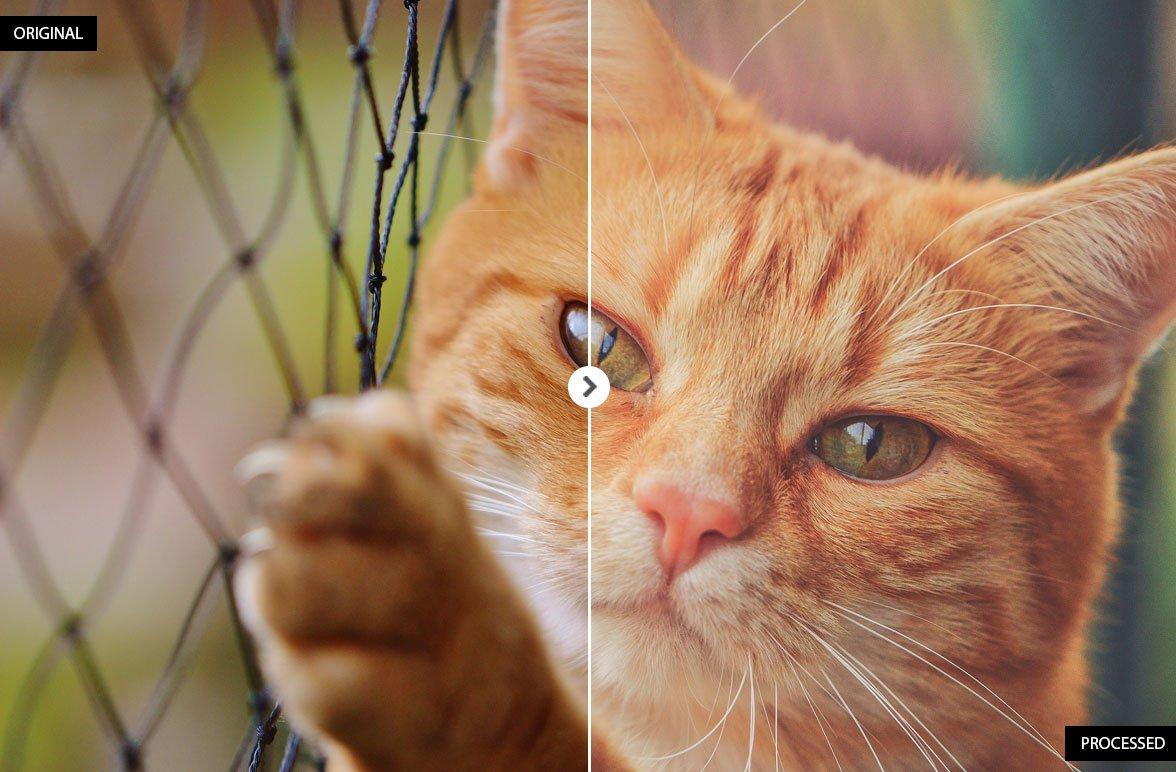 17 Animal Lightroom Presets - Add-Ons - 5