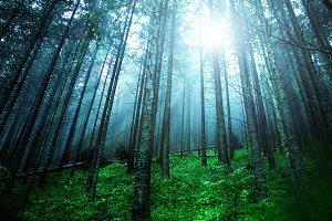 Green foggy forest.