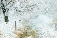 Frozen winter forest path