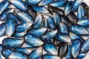 Blue seashells background.