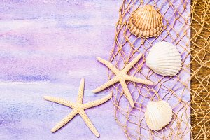 Seashells on watercolor background.