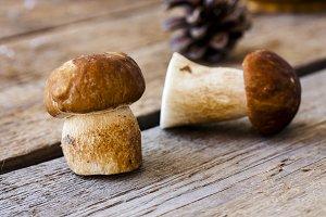 group of porcini mushrooms