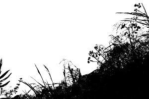 Leafy Vegetation Isolated Background