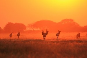 Antelope Beauty - A Vibrant Sunset