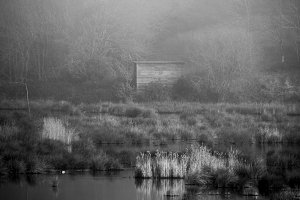 Refuge in the mist