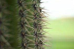 Cactus  & Needles