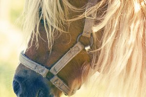 Pint Size Pony