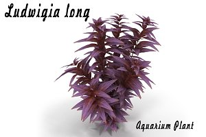 Ludwigia long