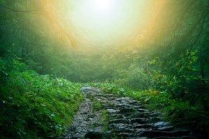 Path in dark green forest.