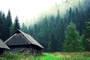 Small wooden house in foggy forest.