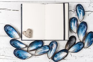 Seashells and white page.