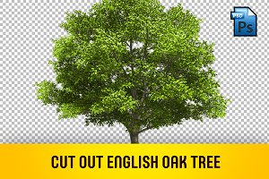 CUT OUT ENGLISH OAK TREE